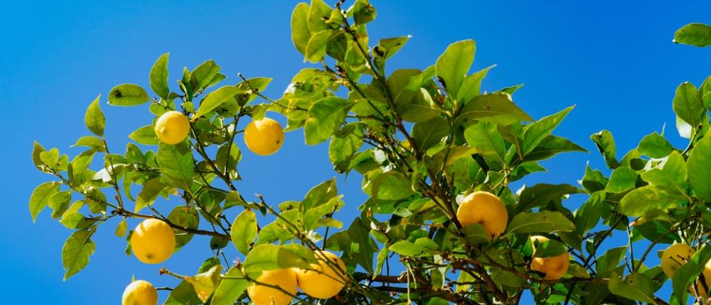 The Lemon Festival in Menton; a citrus spectacular!