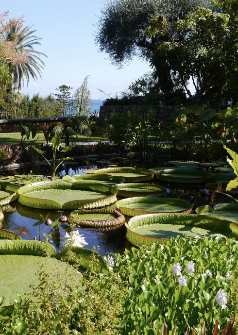 Villa Genesis - Jardin Serre de la Madone